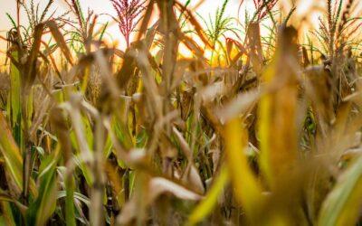 Quais as áreas de atuação relacionadas à Agronomia?